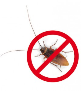 insectes_stop
