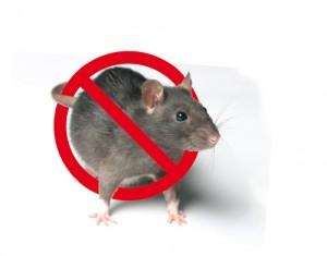rat_stop
